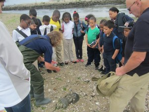 Roosevelt School students observe Maritime Aquarium staff tag crabs at St. Mary's by the Sea in Bridgeport, CT (June 2014)